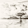 """ETC-3501-WPP1711 """"Lonely Cypress with Clouds """" Med  File_9988-6"""