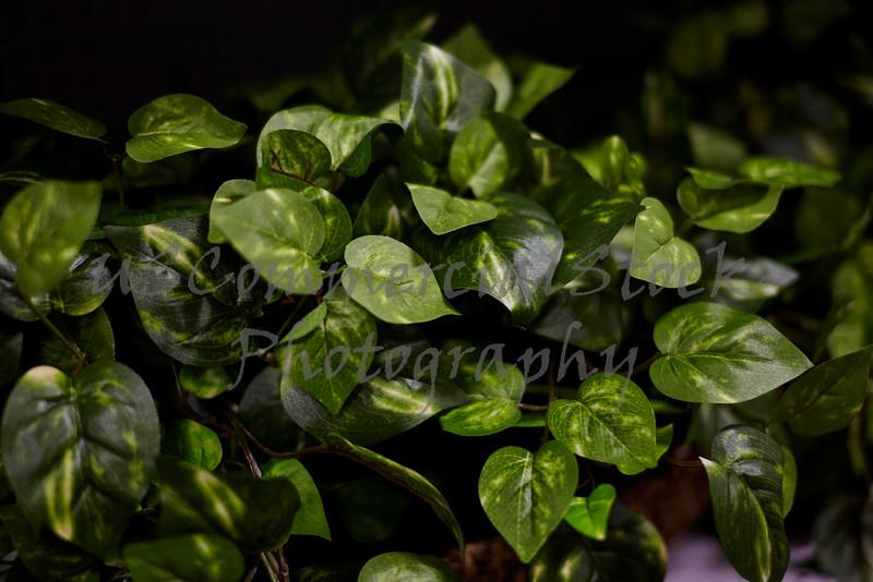 Geen Leaf House Plants