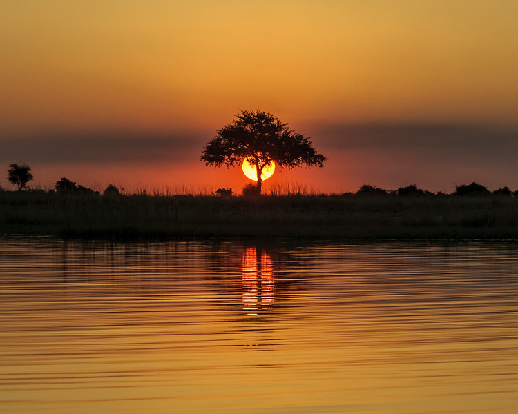 Sunset Tree #1