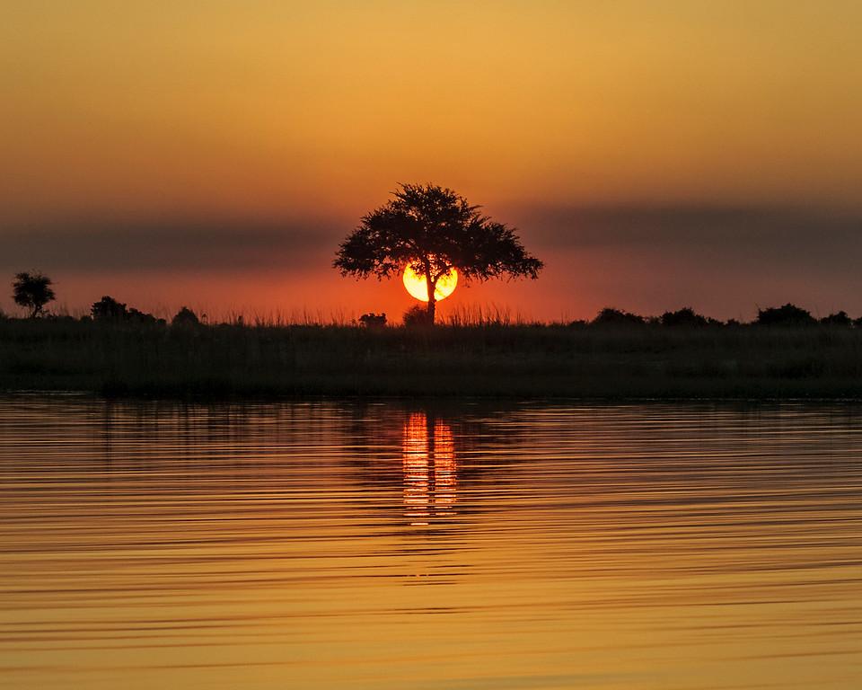 Sunset Tree #1