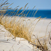 Dunes at Island Beach State Park, NJ