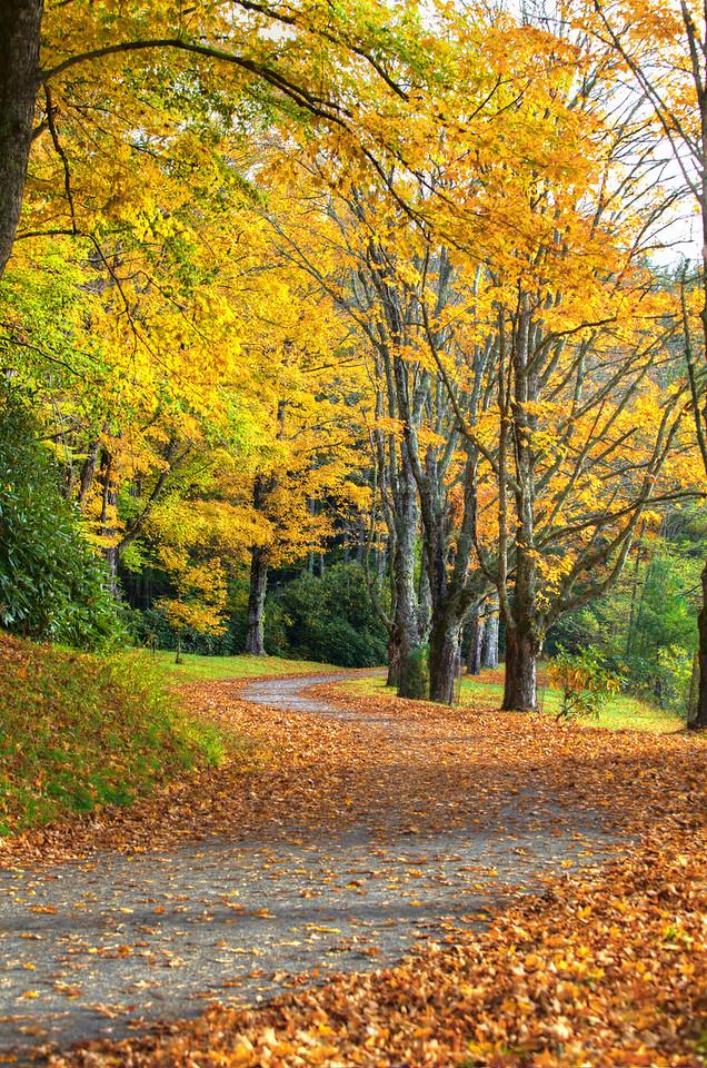 Yellow leaves falling