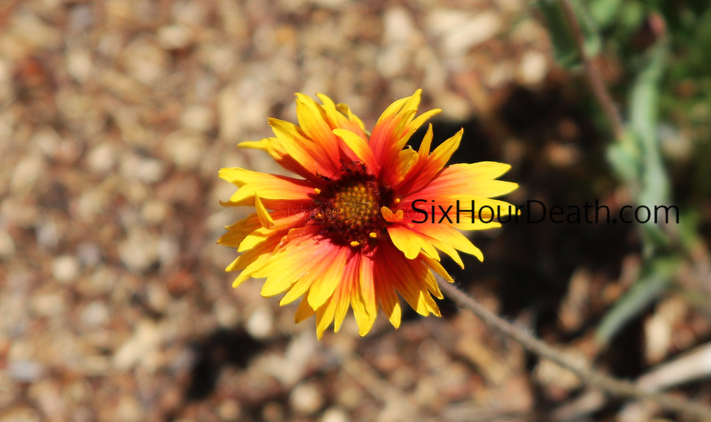 Colorado Flower Power