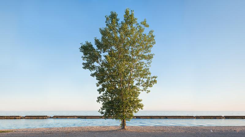 Sunnyside Tree Pano 2016