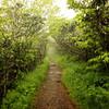 Craggy Path