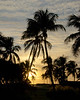 ETC2546   Sunset Palms   JDA_8091
