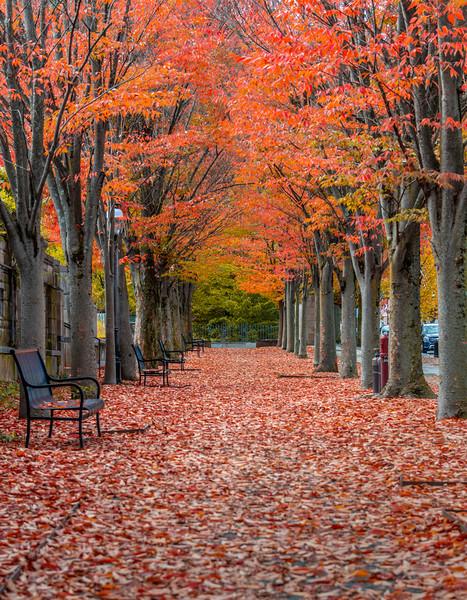 An Autumn Tree Lined Walkway In Princeton, NJ 10/27/20