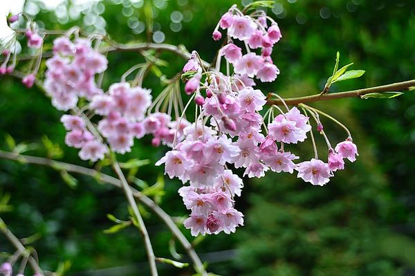 QA Blooms
