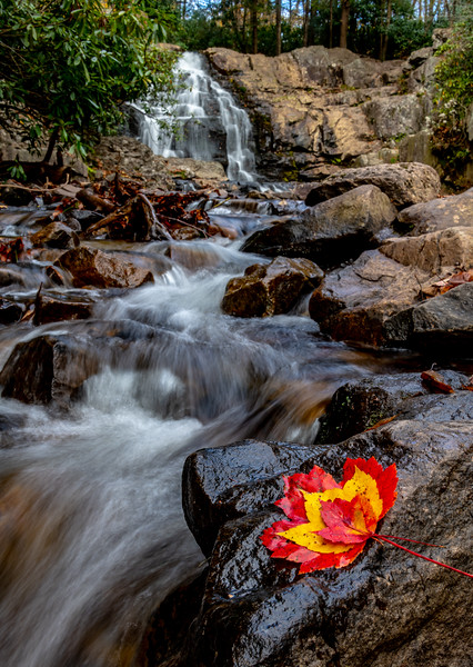 Colorful Autumn Leaves On Rocks At Hawk Falls in PA 10/18/19