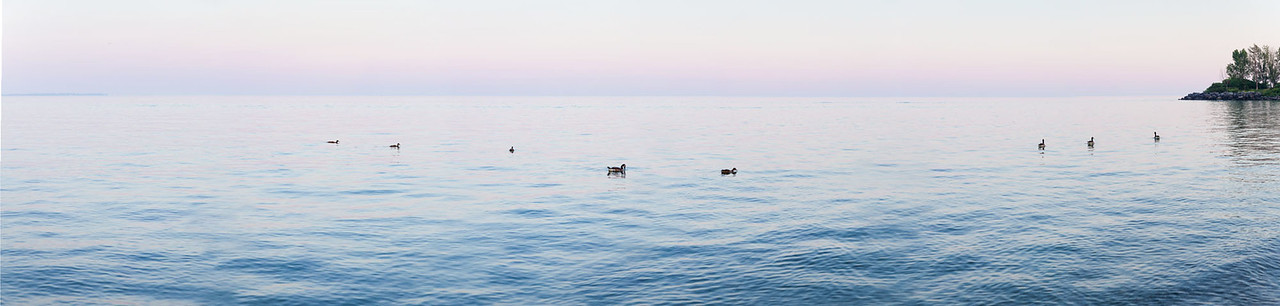 Lake Ontario Purple 2014