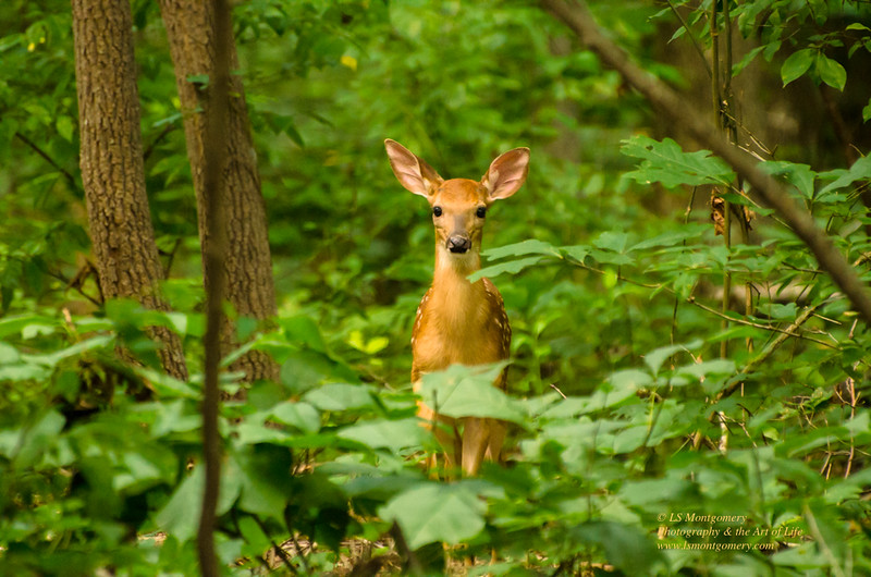 """Who are you?"", asked the curious fawn."