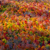 Autumn Foliage In The White Mountains, NH 10/5/20