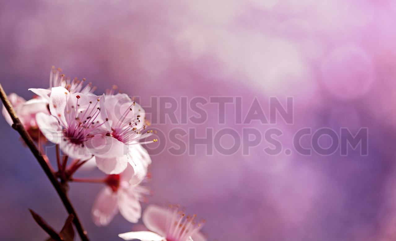 Pink flower bloom on purple background with bokeh