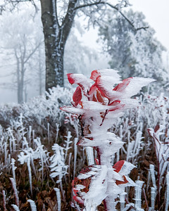 Rime Ice on Red