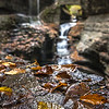 Wet Leaves at Rainbow Falls in Watkins Glen State Park, NY 10/16/17