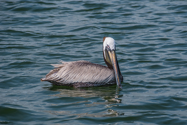 Pelican 1405