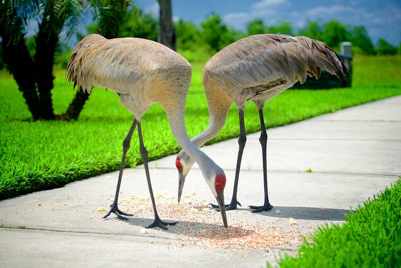 """ETC-3141  """"Two Cranes"""""""