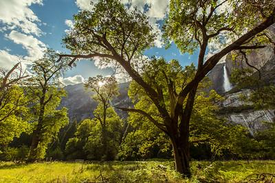 Yosemite Valley. #hiking #getaway #nationalparks #outdoors @nationalparkservice @nationalparkspass #nature #parks #yosemitenationalpark #yosemite #photography #canon #5dmkiii
