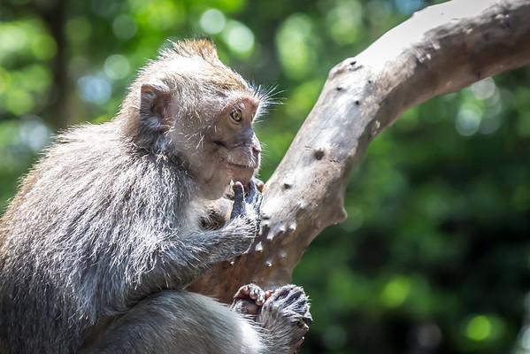 Naughty Monkey