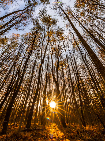 The Sunrise Shining Through The Autumn Trees 11/6/20