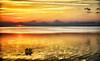 """ETC-3042  """"Orange Sunset Over Lake Apopka"""