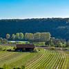 Vineyards in Germany 4/20/17