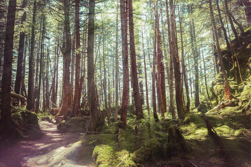 Joshua D Weiss Fine Art Photograph of Mossy Trees at Mendenhall Glacier in Juneau Alaska