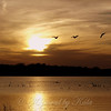 Golden Shimmer of Sunset at White Rock Lake, with Ducks