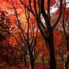 Autumn at Bodnant 2