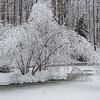 A Snowy Scene 2/7/21