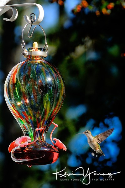 Hummingbirds @ Feeder