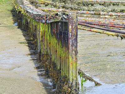 Sea Defences in Pagham Harbour