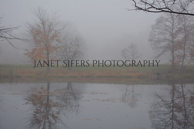 Foggy day on the pond
