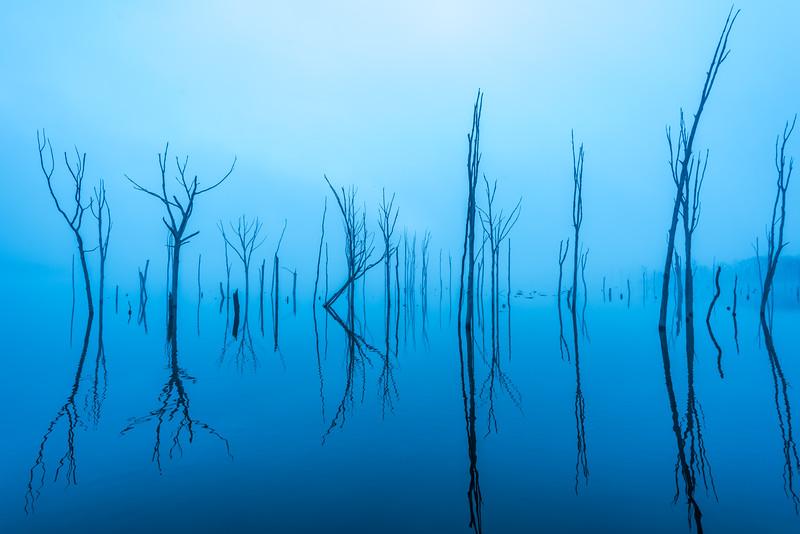 Foggy Morning at Manasquan Reservoir 2/23/17