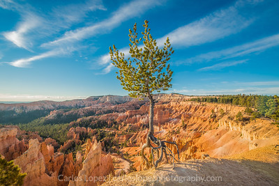 Survivor, Bryce Canyon #2