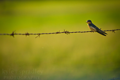 Photo by Kyle Spradley | © Kyle Spradley Photography | www.kspradleyphoto.com