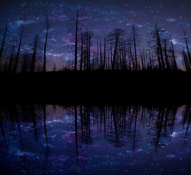 Old Forest Reflections