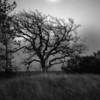 Full Moon On Barn Bluff