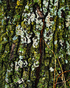 Textures of Nature