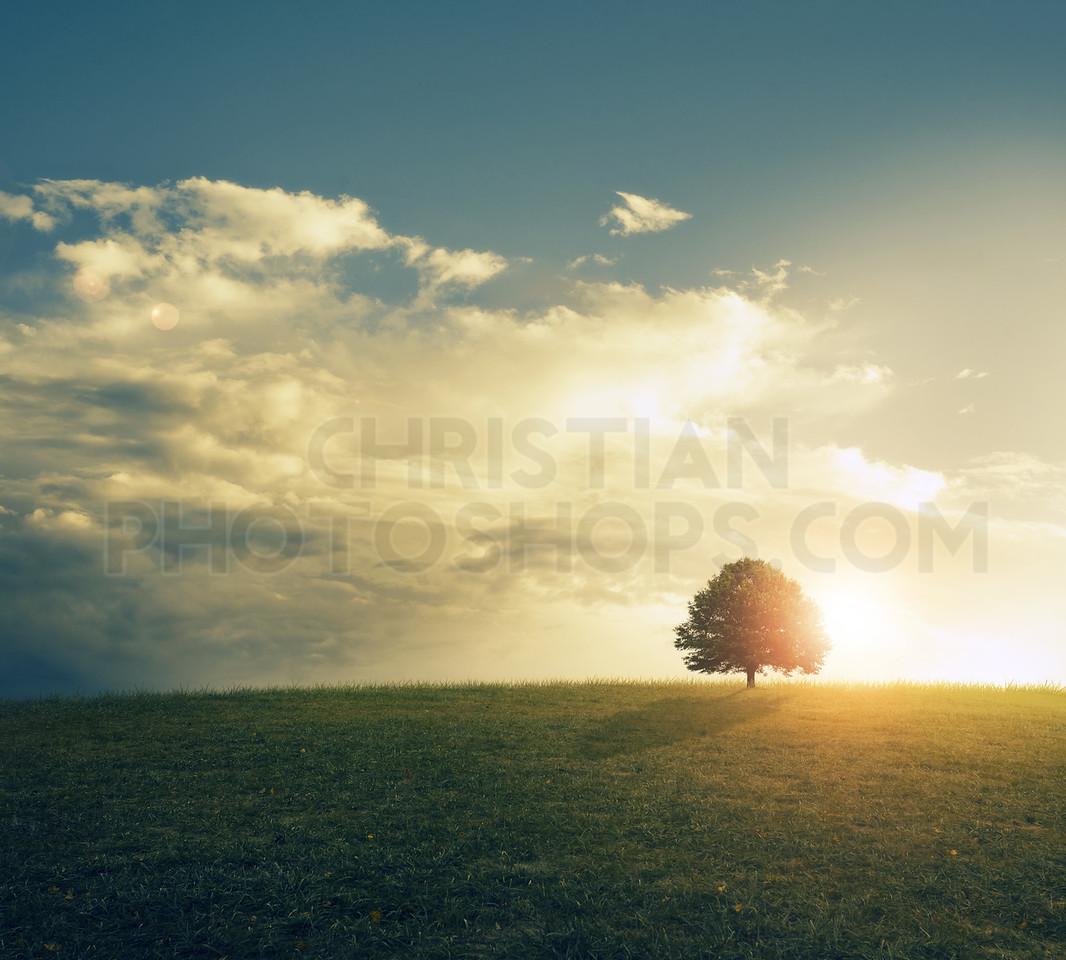 Sunset in grassy field.