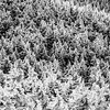 Snowy Spruce, Mt Ellen, Sugarbush Resort.