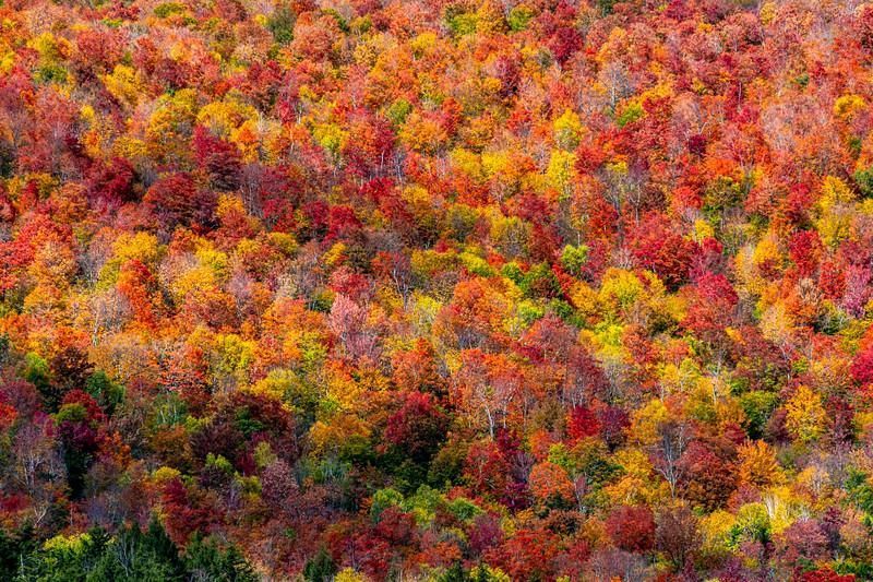 Autumn Foliage In The White Mountains, NH 10/5/20