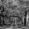 Desolate Driveway 11/3/18