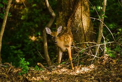 A New Backyard Neighbor