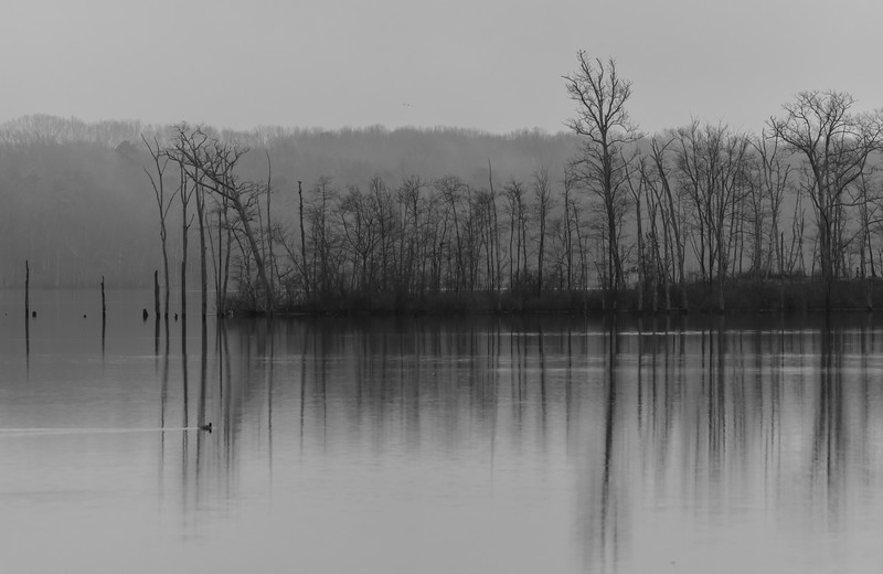 A Foggy Morning at Manasquan Reservoir 2/18/19