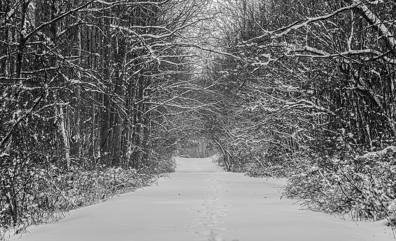 A Snowy Scene At Manasquan Reservoir 2/1/21