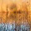Dawn Pond 2014