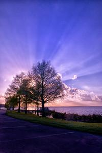 """ETC-3054  """"Purple Sunburst Through Trees"""""""