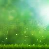 Grass and bokeh