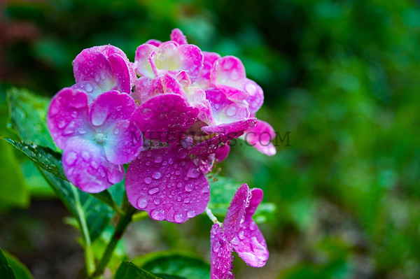 Flowers After Soft Rain